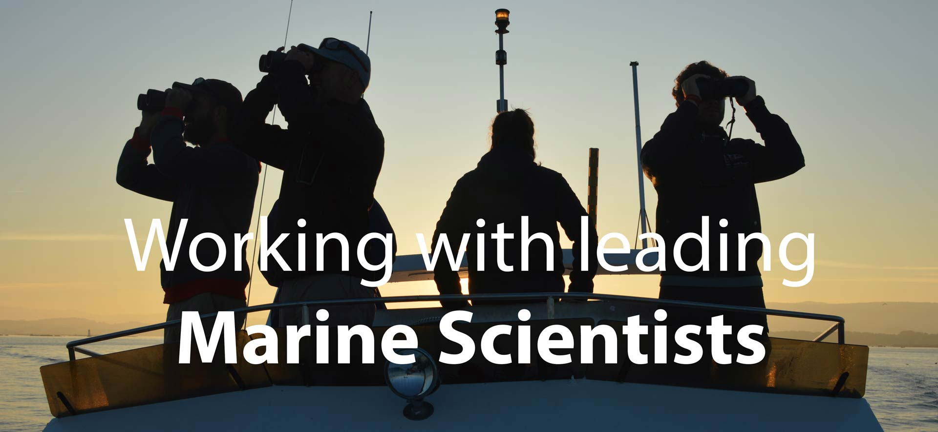 Become a marine mammal scientist