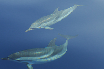 Studying dolphins and whales in Mediterranean waters