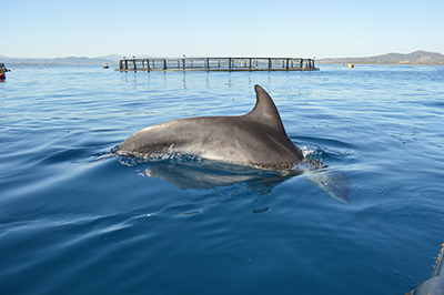 Bottlenose dolphin research