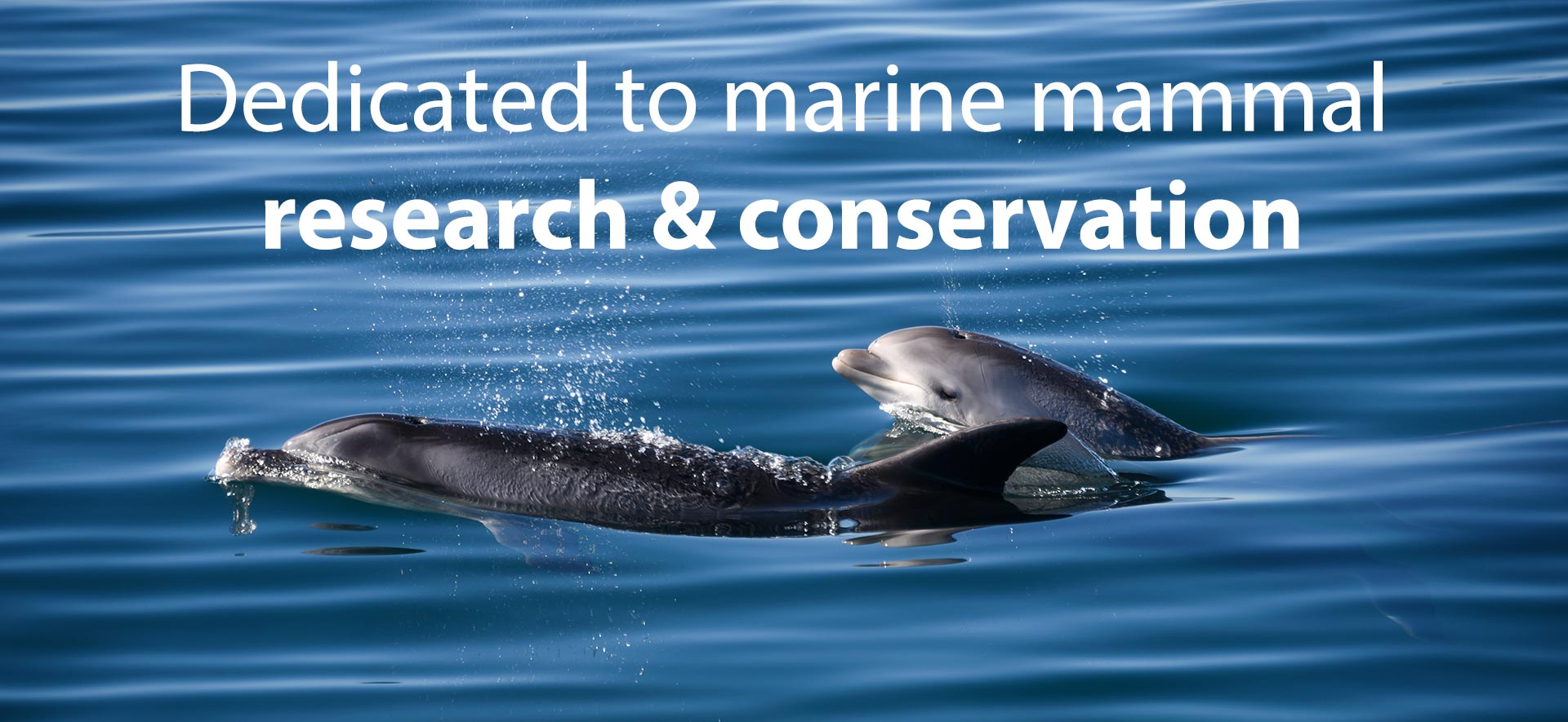 Marine mammal research and conservation
