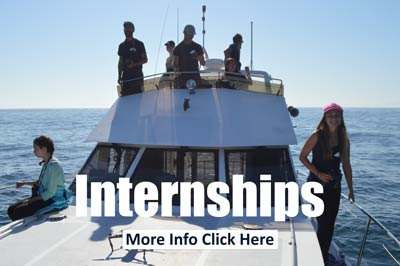 Internship in marine mammal science