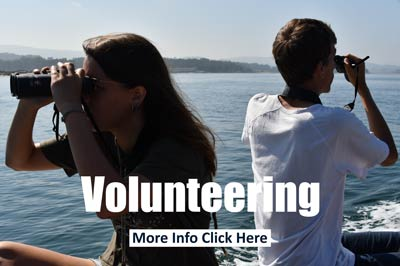 Volunteering with dolphins and whales
