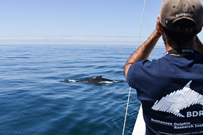 Studying whales in Spain