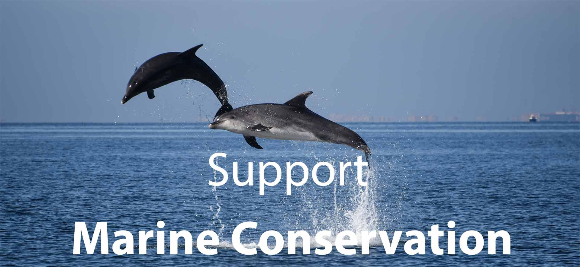 Support marine conservation